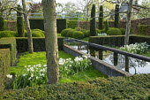 Yew hedge enclosing formal raised pond, drift of Tulipa 'Casablanca', Narcissus 'Thalia', pleached apple trees, cloud-pruned box hedges and yew columns