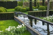Yew hedge enclosing formal raised pond, Tulipa 'Casablanca', Narcissus 'Thalia', pleached fruit trees, cloud-pruned box hedges
