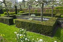 Yew hedge enclosing formal raised pond, Tulipa 'Casablanca', pleached apple trees