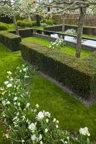 Yew hedge enclosing formal raised pond, drift of Tulipa 'Casablanca' and Leucojum aestivum pleached apple trees