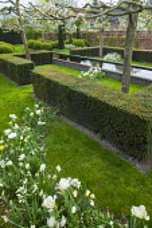 Yew hedge enclosing formal raised pond, drift of Tulipa 'Casablanca' and Leucojum aestivum, pleached apple trees