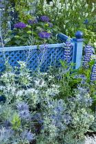 Blue painted trellis, eryngium, lupins, hydrangea, perovskia