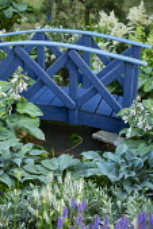 Blue painted bridge over pond, hosta, astilbe