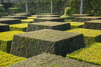 Contemporary topiary garden