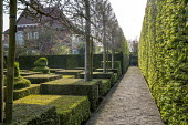 Contemporary topiary garden, pleached tree screen, gravel path