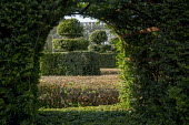 View through window in yew hedge to yew topiary