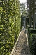 Gravel path, hornbeam hedge