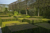 Contemporary topiary garden, pleached tree screen