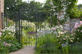 Black wrought iron gates, brick wall, Campanula lactiflora, Rosa 'Félicité Perpétue', 'Felicia', 'Prosperity' and 'Buff Beauty', lavender