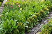 Border edged with clipped box balls