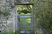 View through wooden gate in stone wall into orchard