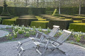 Contemporary topiary garden, wooden recliner chairs on gravel terrace, Narcissus 'Jack Snipe'