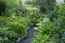 Path edged with Primula florindae, stone edging