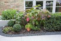 Hydrangea quercifolia, box balls, Euphorbia mellifera, yew hedge, bark and gravel mulch
