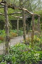 Rustic wooden pergola, hellebores, erythroniums, anemones