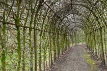Hornbeam tunnel