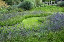 Wavy grass path through drifts of Lavandula x intermedia 'Grosso' edged with Sesleria 'Greenlee'