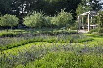 Wavy grass path through drifts of Lavandula x intermedia 'Grosso' edged with Sesleria 'Greenlee', Pyrus calleryana 'Chanticleer', wooden arbour