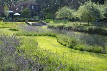 Wavy grass path through drifts of Lavandula x intermedia 'Grosso' edged with Sesleria 'Greenlee', Pyrus calleryana 'Chanticleer'