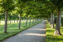 Double avenue of Tilia platyphyllos 'Rubra'