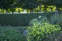 Nicotiana 'Lime Green', echinops, veronicastrums, geranium foliage