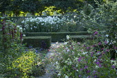 Nicotiana, phlox, low clipped box hedges
