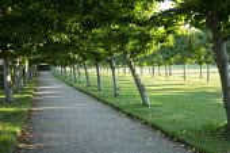Double avenue of Tilia platyphyllos 'Rubra', gravel path