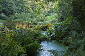 Natural ponds surrounded by ferns, darmera and hydrangea