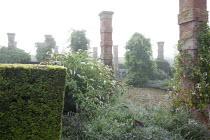 Wisteria and Fallopia baldschuanica climbing on brick piers, yew hedge, buddleia