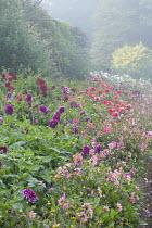 Colourful dahlia border