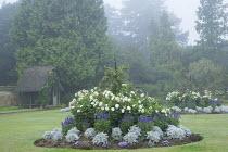 Circular border in lawn with summer bedding, Dahlia 'Suffolk Bride', Salvia farinacea 'Reference', Senecio cineraria 'Silver Dust', Ricinus communis