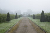 View along misty avenue to arbour