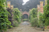 Rose, grape vine, wisteria and Fallopia baldschuanica climbing on brick piers, bacopa in large stone container, view towards gate