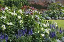 Dahlia 'Suffolk Bride', Salvia farinacea 'Reference', Senecio cineraria 'Silver Dust', Ricinus communis
