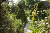 Yew topiary in enclosed white garden