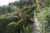 Large terracotta urn in cloud-pruned Pistacia lentiscus, stepping stone path, Lagerstroemia indica