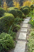 Cloud-pruned Pistacia lentiscus, stepping stone path, Lagerstroemia indica