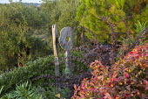 Oak sculpture, 'Wherever you are is called Here', in border, Berberis thunbergii, Trachelospermum jasminoides, Pinus halepensis