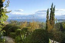 Cloud-pruned Pistacia lentiscus and Lagerstroemia indica in Mediterranean garden