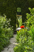 Stone path through arch in clipped yew hedge, Anthriscus sylvestris, papaver