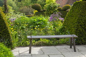 Wooden bench on stone patio, Meconopsis cambrica, yew topiary, aquilegia