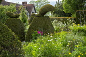 Large yew topiary in cottage garden
