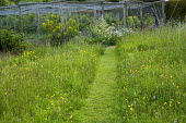 Mown path through wildflower meadow, fruit cages