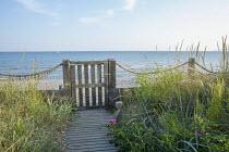 Coastal garden, gate to shingle beach, Ammophila arenaria