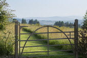 Metal gate, mown grass path, wildflower meadow