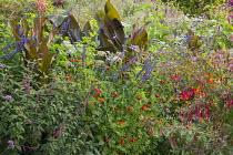 Tagetes 'Cinnabar', fuchsia, Canna indica 'Purpurea', Salvia 'Indigo Spires'