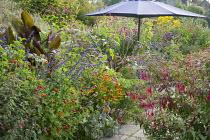 Umbrella over table in border, Persicaria orientalis, Helenium 'Sahin's Early Flowerer', Tagetes 'Cinnabar', fuchsia, Canna indica 'Purpurea', Salvia 'Indigo Spires'