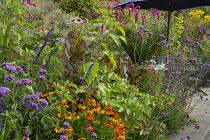 Persicaria orientalis, Helenium 'Sahin's Early Flowerer', Verbena bonariensis, Canna indica 'Purpurea', table and chairs on patio
