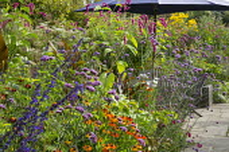 Verbena bonariensis, Persicaria orientalis, Helenium 'Sahin's Early Flowerer', Salvia 'Indigo Spires', Canna indica 'Purpurea', table and chairs with umbrella in border