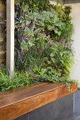 Living green wall, raised bed with timber edging, built-in bench, Liriope muscari, Hedera helix, Ipe hardwood raised bed